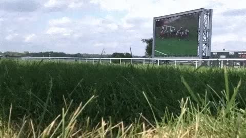 Watch turf GIF on Gfycat. Discover more related GIFs on Gfycat
