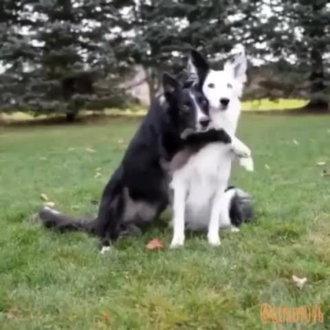 Watch and share Best Friend GIFs and Puppies GIFs by Cindy046  on Gfycat