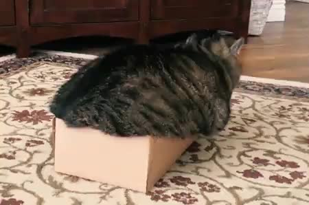 box breaking unit • r/AbsoluteUnits GIFs