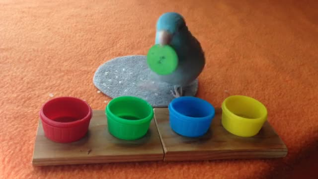 Watch and share Parrotlet GIFs and Parrot GIFs by likkaon on Gfycat