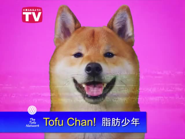 Watch this trending GIF on Gfycat. Discover more 1800tobë, Tofupupper, bread, breads, dog, dogs, funny, shiba, shibainu, wholesome GIFs on Gfycat