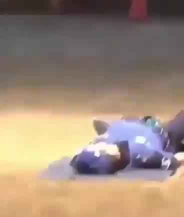 Pupper performing CPR on his partner GIFs