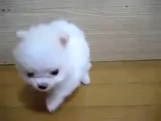 Watch Cute Puppy GIF on Gfycat. Discover more Cute Puppy GIFs on Gfycat