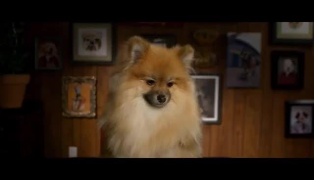 Watch and share Tegan And Sara 's Sad Puppy GIFs on Gfycat