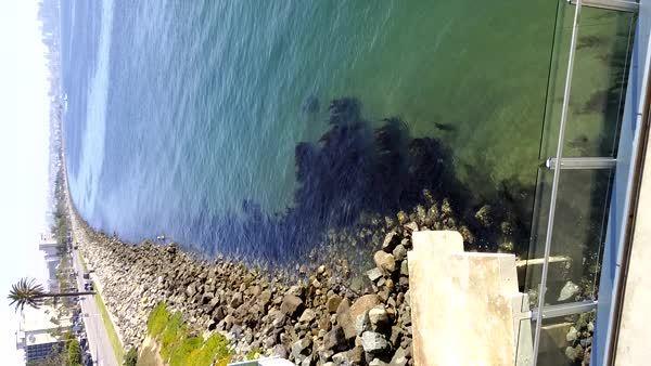 Peaceful Coast GIFs