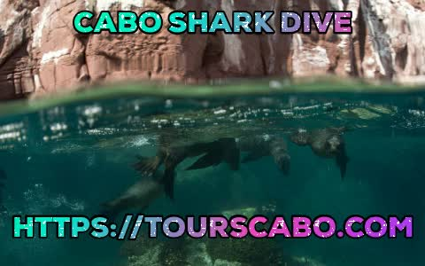 Watch and share Cabo Shark Dive GIFs and Shark In Cabo GIFs by Tours Cabo on Gfycat