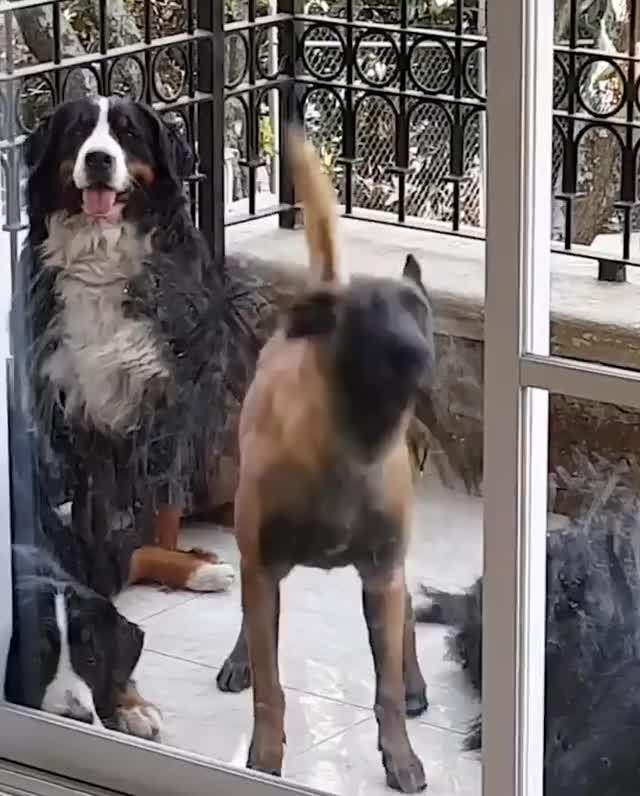 Watch and share Dogs GIFs by GB on Gfycat