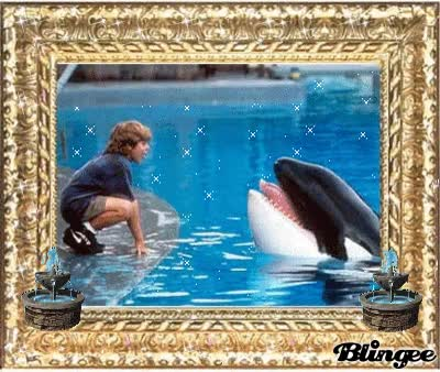 Watch free willy GIF on Gfycat. Discover more related GIFs on Gfycat