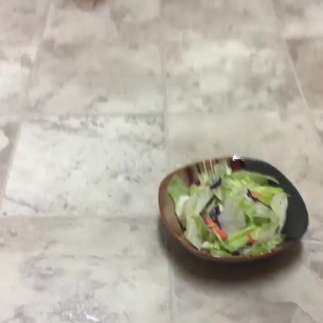 Cats aren't fans of salad it would seem GIFs