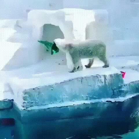 Watch and share Гифки-Белый-медведь-конус-4495090 GIFs on Gfycat