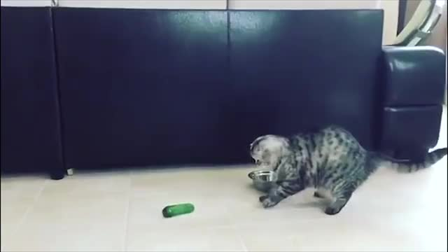 Watch and share Funny Cats Scared Of Cucumbers - Cat Vs Cucumber Compilation GIFs on Gfycat