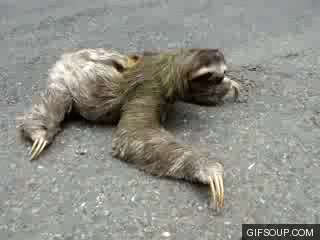Watch sloth GIF on Gfycat. Discover more related GIFs on Gfycat