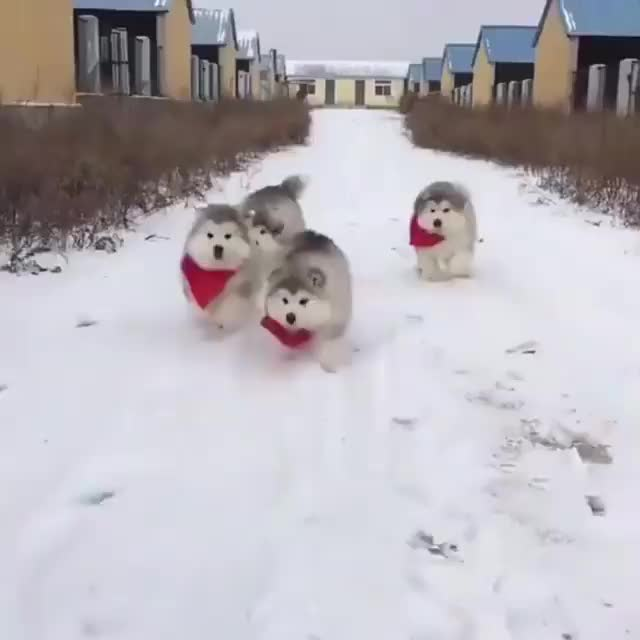 Watch and share Puppies GIFs and Puppy GIFs by Koleandra on Gfycat