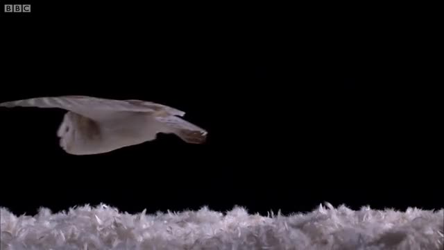 Watch Owl GIF on Gfycat. Discover more Predator, SCIENCE, Silent, Speed, animals, bbc, bird, can, experiment, fly, flying, force, how, nature, quiet, sound, test, wild, wildlife, wings GIFs on Gfycat