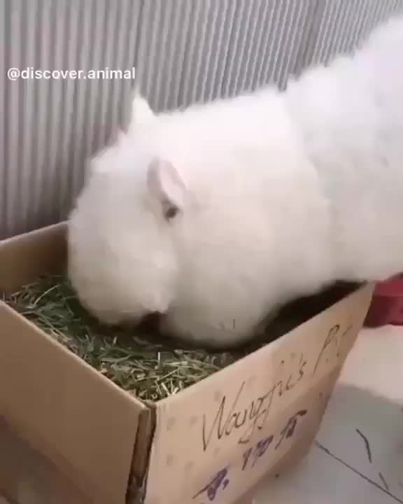 Watch and share Alpaca GIFs by grumpyland on Gfycat