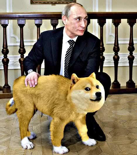 Watch and share Putin GIFs and Shibe GIFs on Gfycat