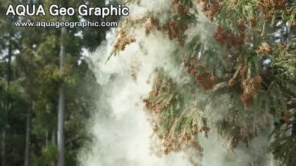 Watch and share Original-1 GIFs by PragueMagic on Gfycat