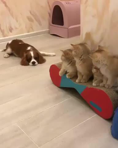 sleeping-cat GIFs