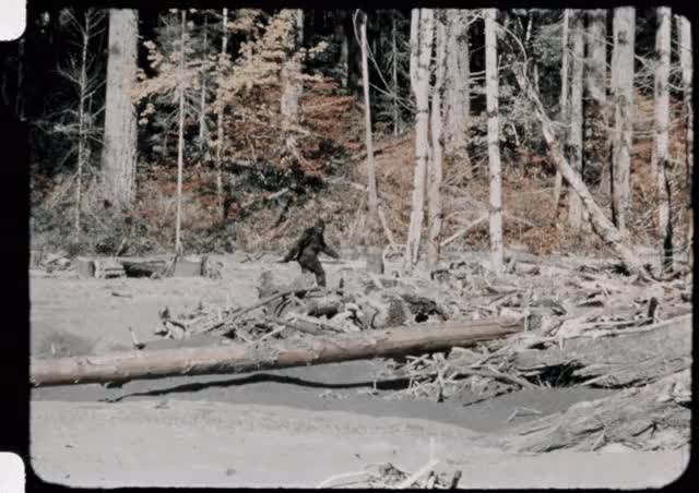 Watch and share Bigfoot-patterson-gimlin-footage-stabilized-1024x723 GIFs on Gfycat