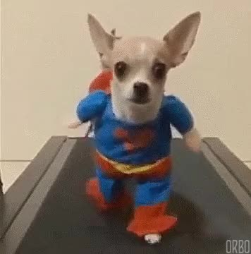Watch this dog GIF on Gfycat. Discover more bark, cute, dog, doge, doggy, woof GIFs on Gfycat