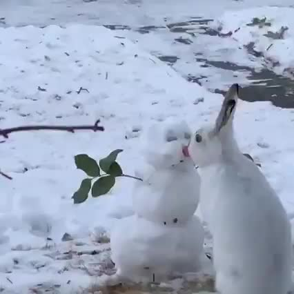Watch and share Snowman GIFs and Carrot GIFs by 5frogmargin on Gfycat