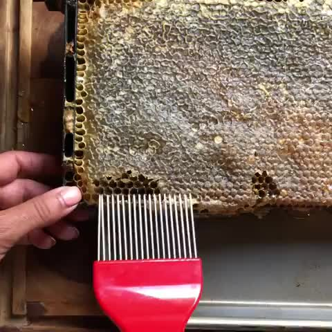 oddly satisfying, honey, wax, Hair picking a honeycomb GIFs