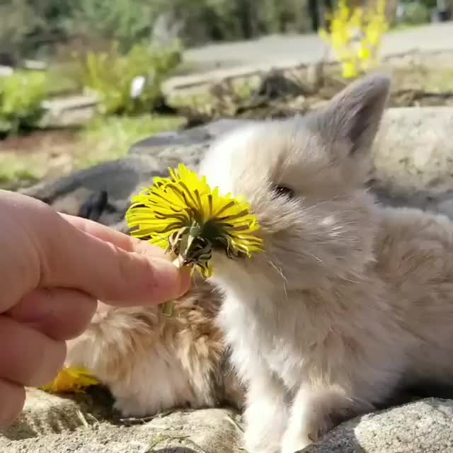 Watch and share Cute Aniamals GIFs and Bunnies GIFs by Morning Hippo on Gfycat