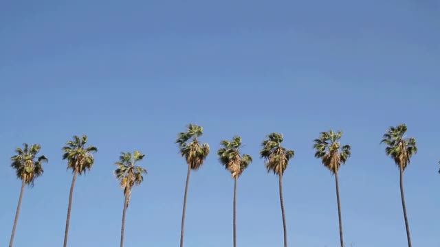 Watch and share Love Los Angeles Poem GIFs on Gfycat