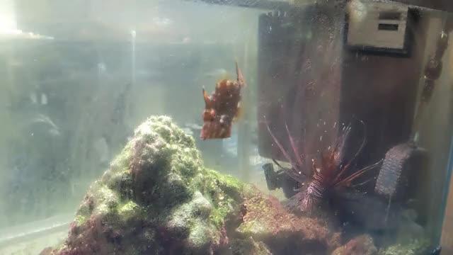 Watch and share Hungry Hungry Filefish GIFs by gryan315 on Gfycat
