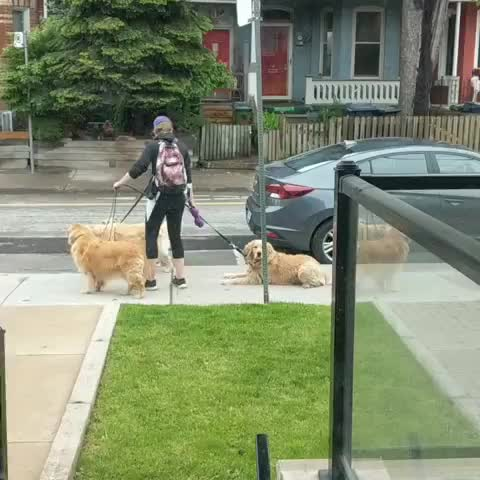 Watch and share Dailybarker GIFs and Dogwalker GIFs by vani  on Gfycat