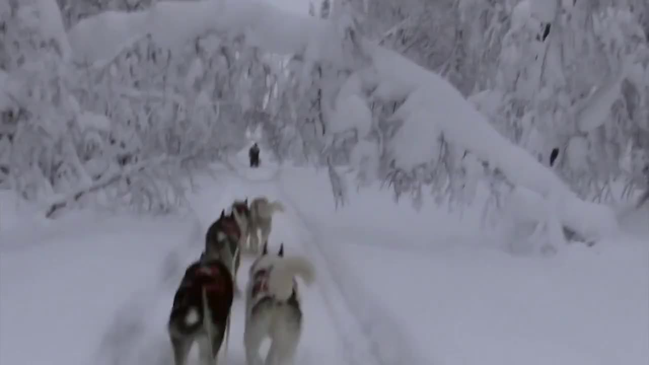 850, Dog, EOS, Forest, Husky, awesome, beutifull, chiens, cold, de, finland, finlande, ll Tags, nature, neau, point, prachtig, sauna, skiing, snow, Finland, January 2012 GIFs