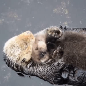 Otters images Otters gifs wallpaper and background photos GIFs