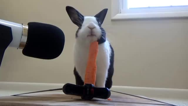 Watch and share Carrot GIFs and Bunny GIFs on Gfycat