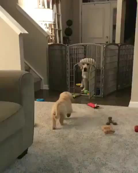 Watch and share Sneaky Doggo GIFs by mellows on Gfycat