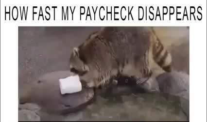 Watch how fast my paycheck disappears GIF by @trusturtechnolust on Gfycat. Discover more funny, ynab GIFs on Gfycat