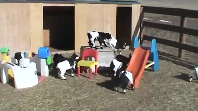Watch this GIF on Gfycat. Discover more goatparkour GIFs on Gfycat