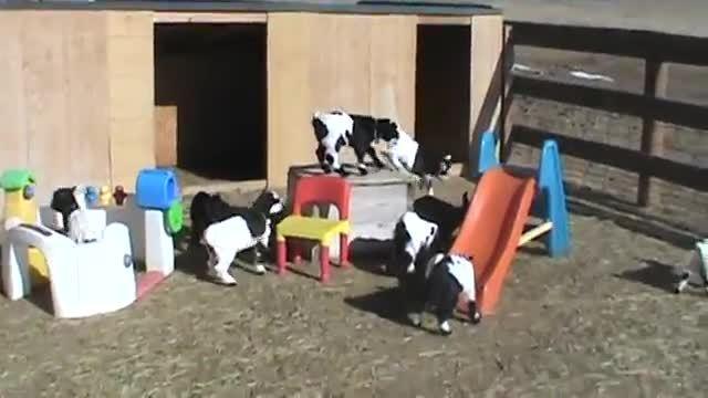 goatparkour,  GIFs