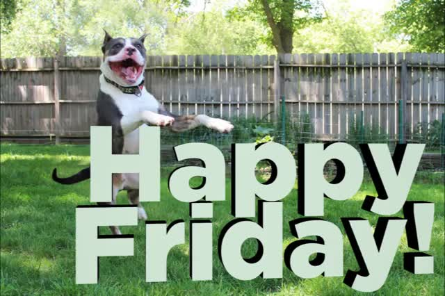 Watch this days of the week GIF by All Paws Pet Wash (@all_paws_pet_wash) on Gfycat. Discover more days of the week, friday, fridays, tgif GIFs on Gfycat