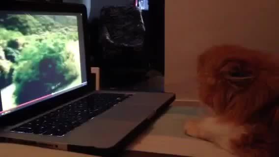 startledcats, ショック動画に騙された驚きと悔しさは異常 (reddit) GIFs