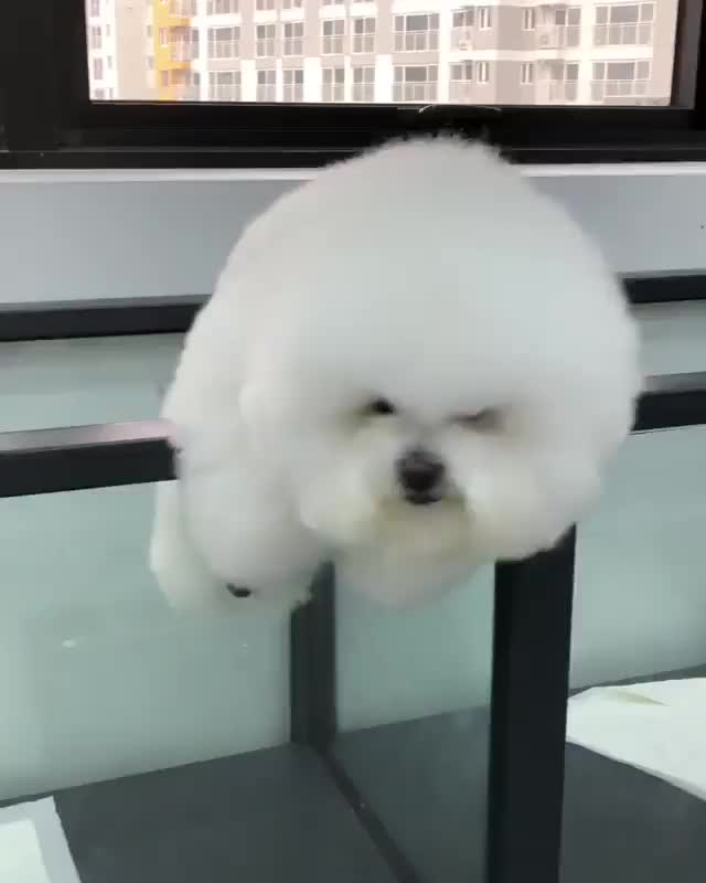 Watch this dog GIF by @sil130 on Gfycat. Discover more Aww, Cute, animal, animals, aww, bark, cute, dog, doggy, woof GIFs on Gfycat
