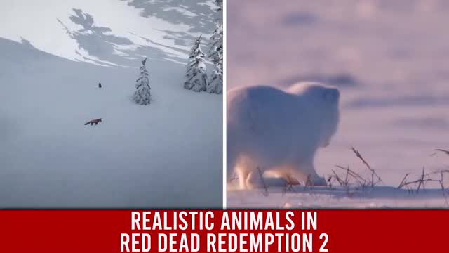 Watch and share Realistic Animals In Red Dead Redemption 2 GIFs by Rockstar Guides on Gfycat