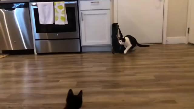 Watch and share Fight GIFs and Cats GIFs on Gfycat