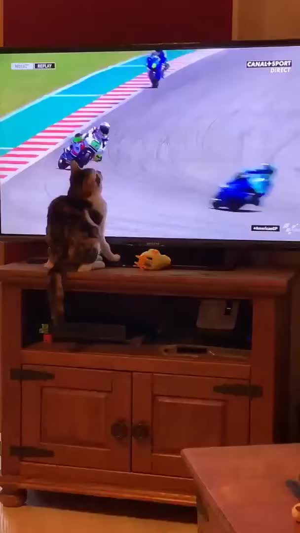 Watch and share Vitaly Petrukhin GIFs and Funny Cats 2019 GIFs on Gfycat