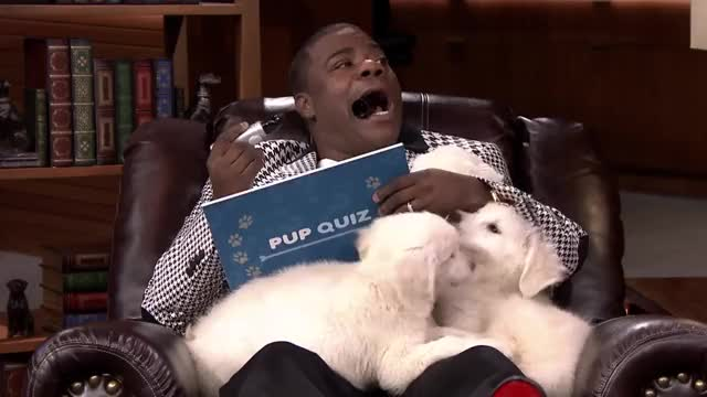 Watch and share The Tonight Show GIFs and Tracy Morgan GIFs by John on Gfycat