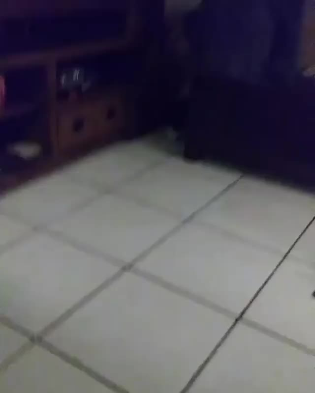 Watch /r/CatsBeingCats - video by shadownoahdm GIF by @cakejerry on Gfycat. Discover more related GIFs on Gfycat