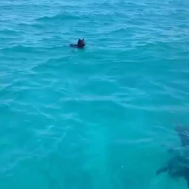 """Watch """"Hello land doge. I am sea doge"""" GIF by HoodieDog (@testycase) on Gfycat. Discover more related GIFs on Gfycat"""