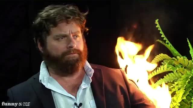 Watch this between two ferns GIF by Funny Or Die (@funnyordie) on Gfycat. Discover more FoD, Funnyordie, between two ferns, between two ferns with zach galifianakis, bruce willis, fod, funny or die, funnyordie, zach galifianakis, ▶ Between Two Ferns with Zach Galifianakis Bruce Willis, ▶ between two ferns with zach galifianakis bruce willis GIFs on Gfycat
