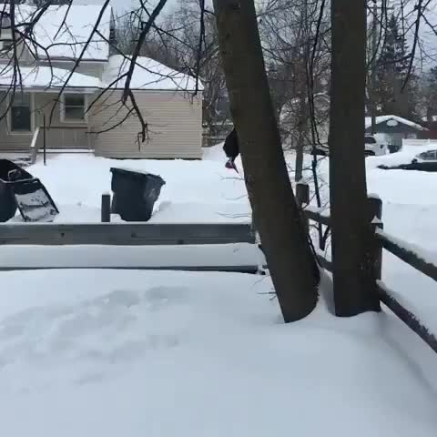 Polar vortex came through Minnesota and froze a Pileated woodpecker where it stood GIFs