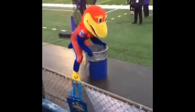 Kansas Jayhawk mascot reacts to 45-14 loss to K-State GIFs
