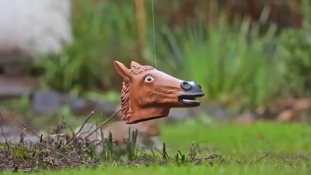 Watch and share Squirrel Feeder GIFs and Horse Head GIFs on Gfycat